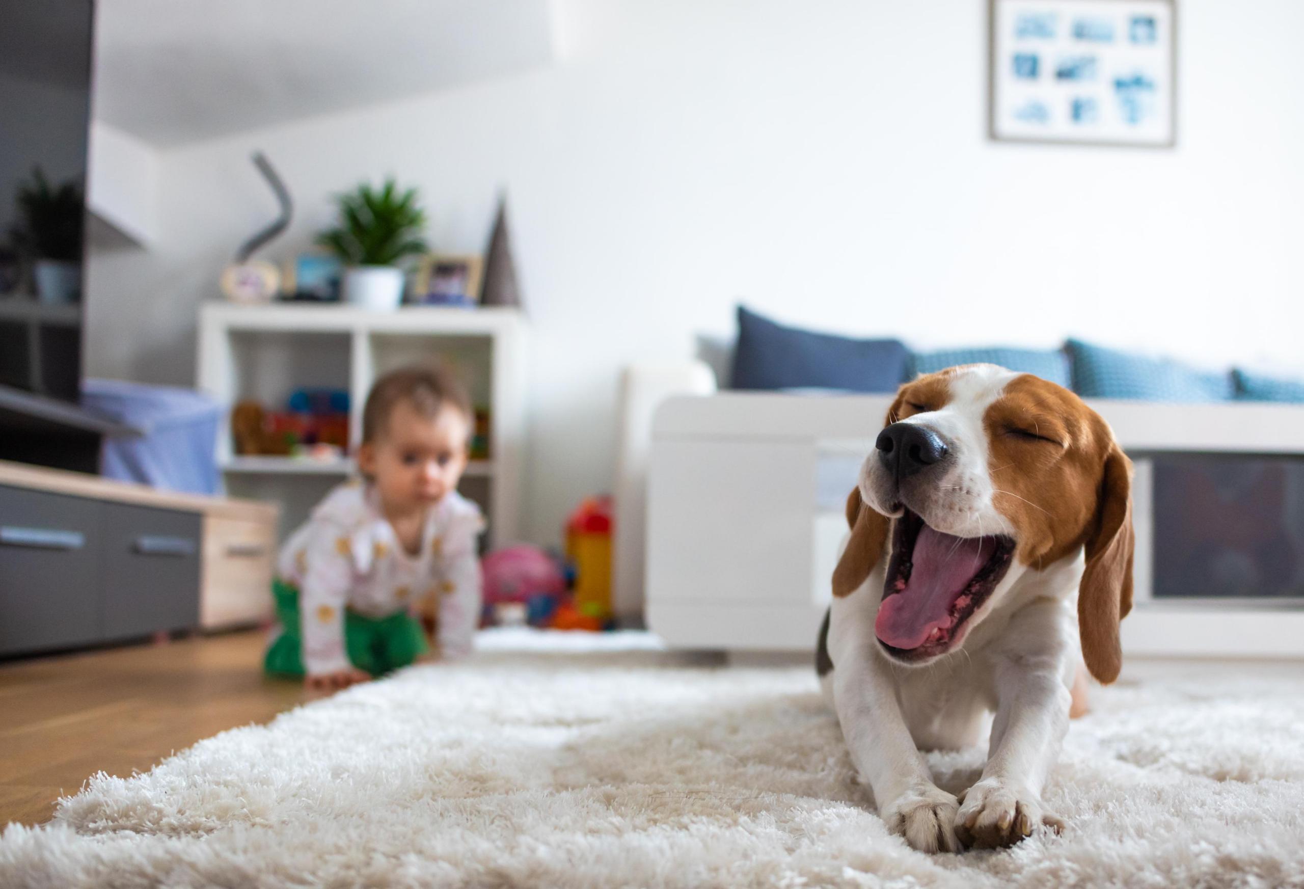baby chasing dog
